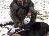 Trophy Black Hawaiian Sheep Hunts in Pennsylvania