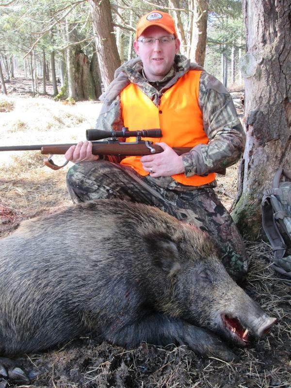 boar1241814