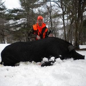 boar13412