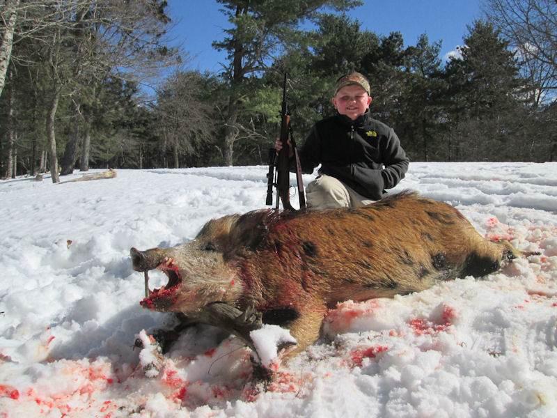 boar1432014