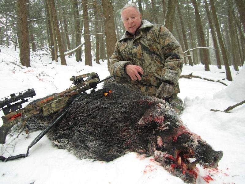 boar1441814