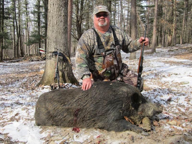 boar2041814