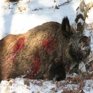 boar2112