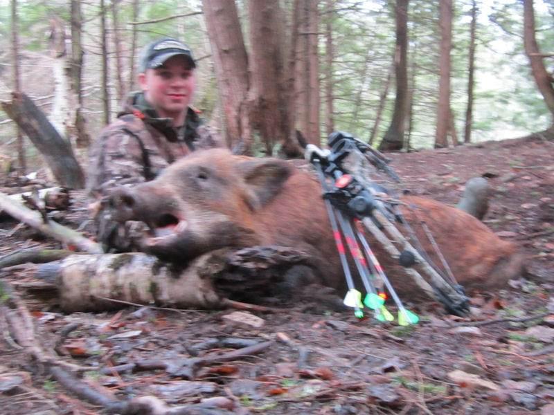 boar2341814