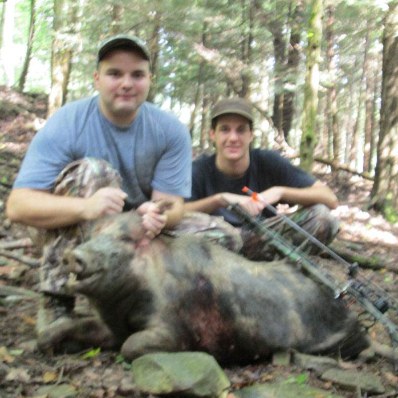 boar24927