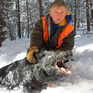 boar4311