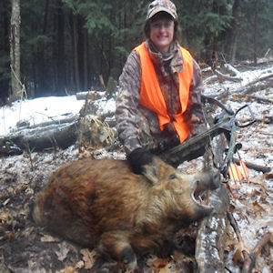 boar4322