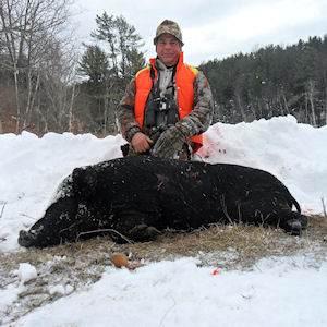 boar436