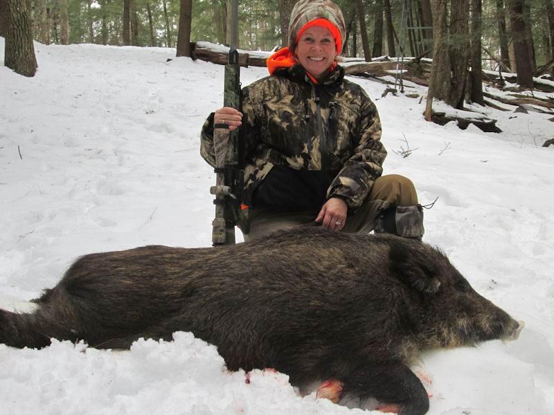 boar532014
