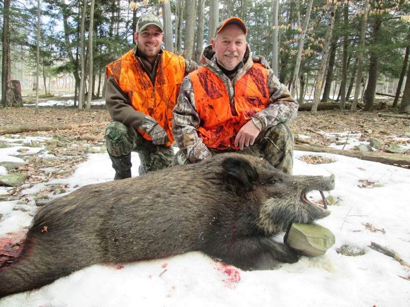 boar541814