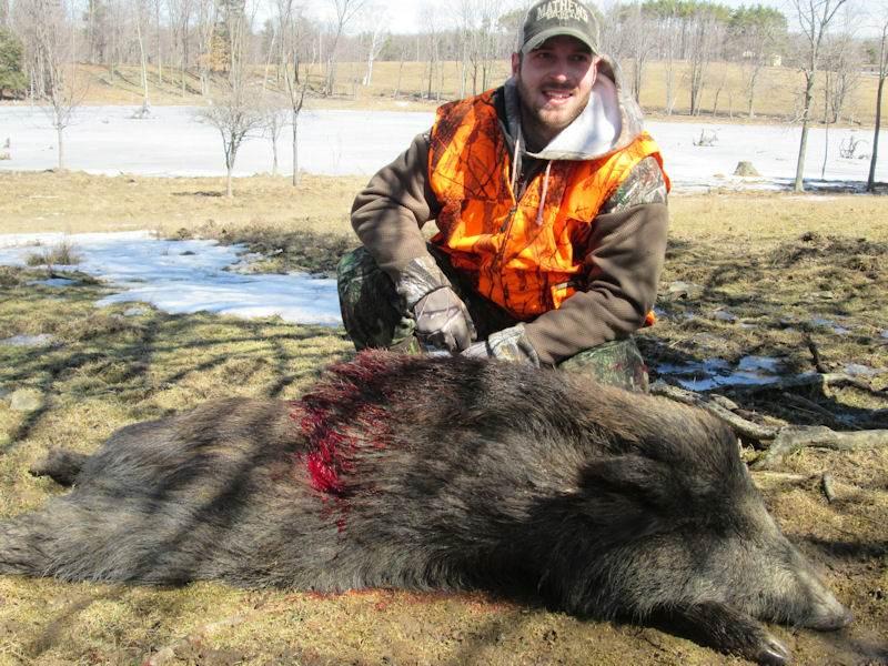 boar641814