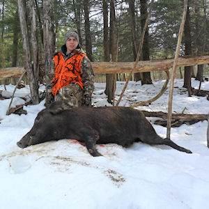 boar8412