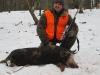 boar1541814