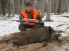 boar1641814