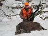 boar232014