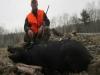 boar242513