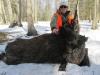 boar432014