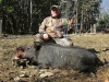 boar441814