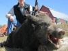 boar642513