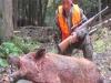 boar91017