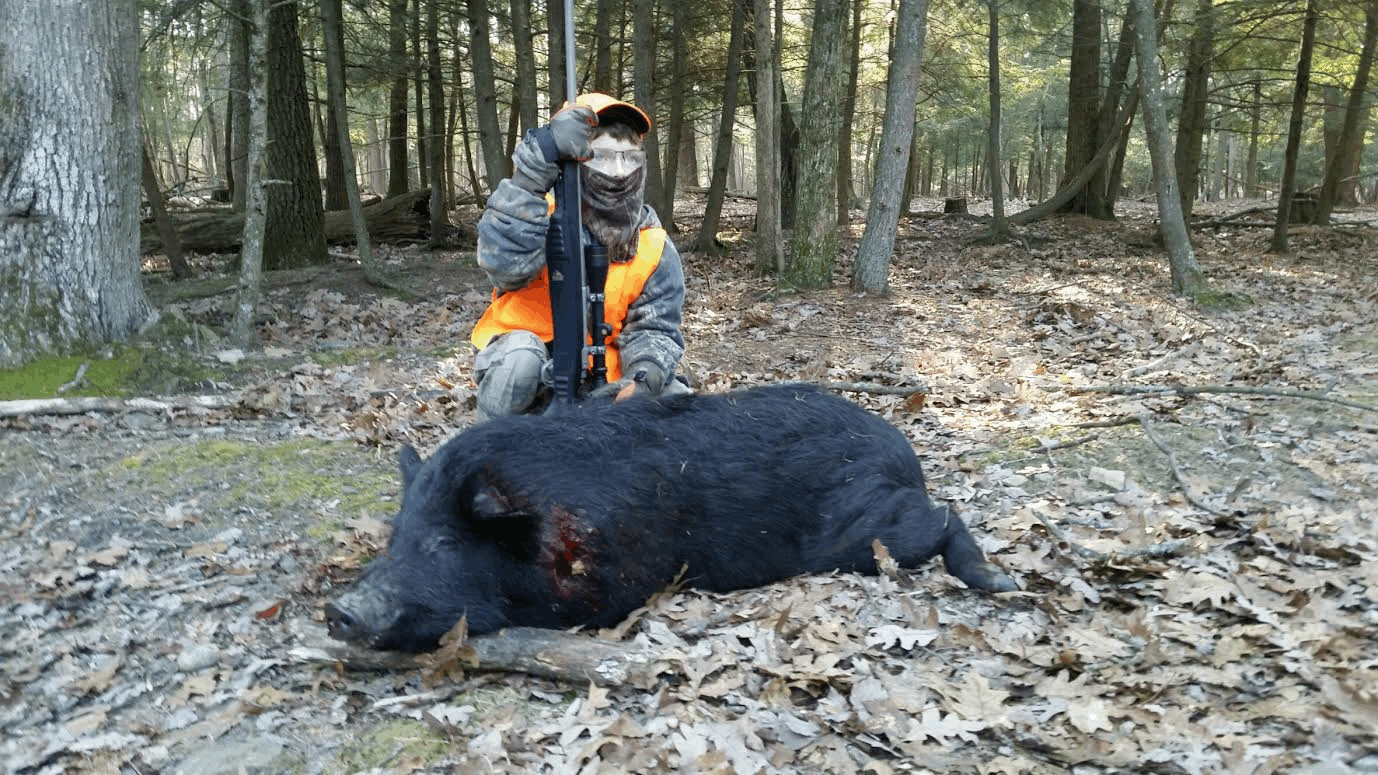 Boar Hunting Trips in Pennsylvania