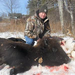 buffalo2221