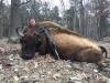 Buffalo Hunting Trips