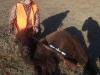 buffalo22112