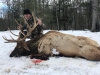 Guided Elk Hunts