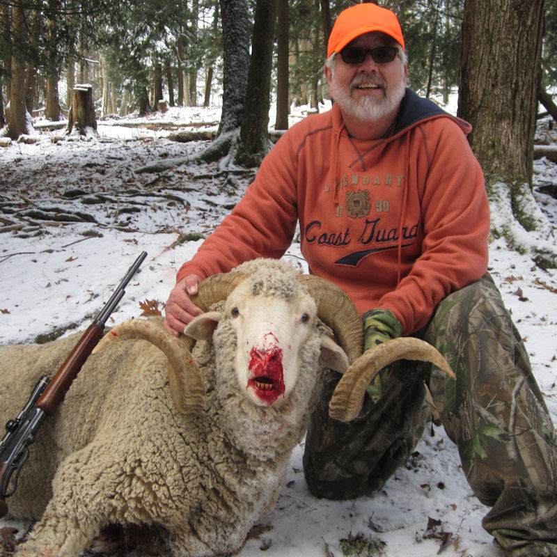 Bighorn Sheep Hunting in Pennsylvania
