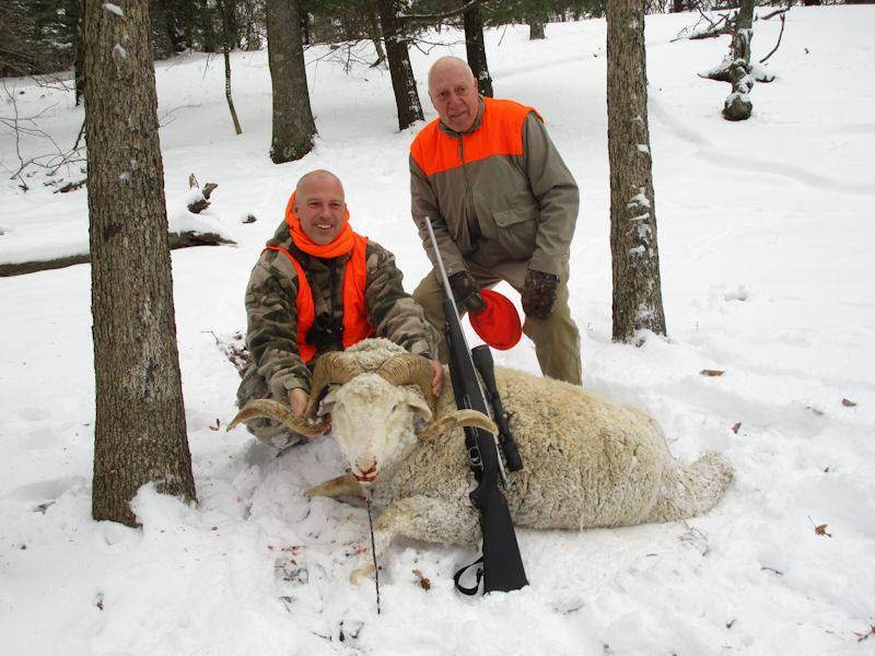 Trophy Ram Hunting in PA
