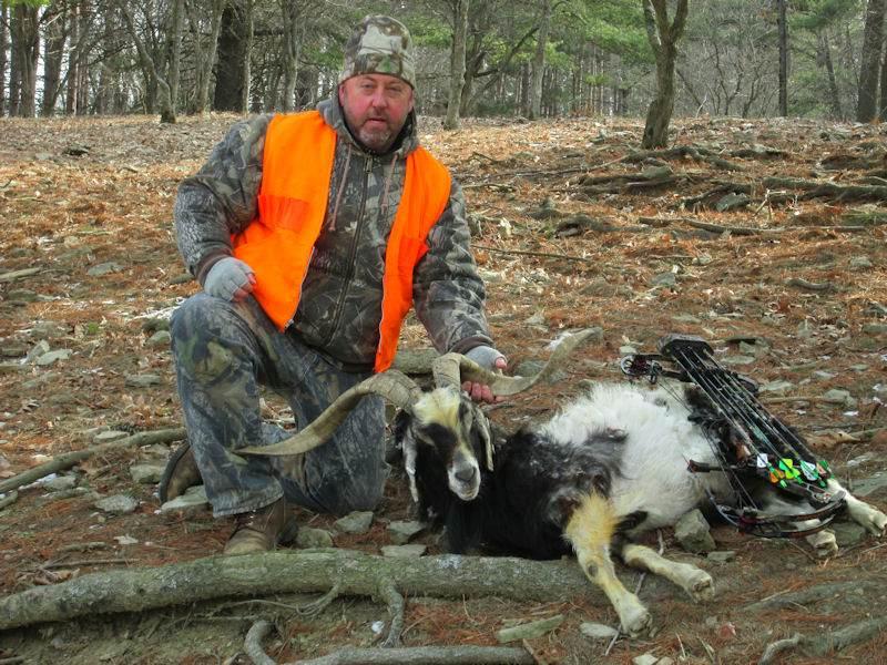 goat141814