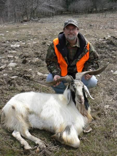goat2bb