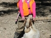 goat151713