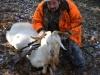 goat5bb
