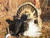 Guided Turkey Hunts in Pennsylvania