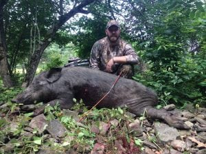 Guided Boar Hunts