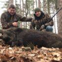 Boar Hunting in Tioga, PA