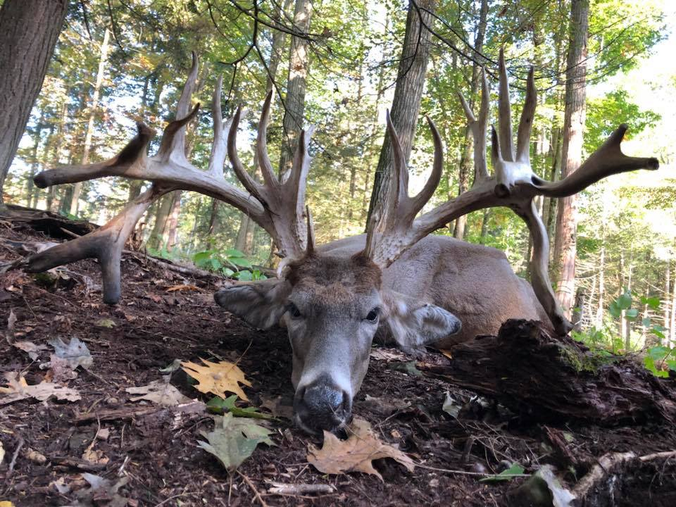 Guided Whitetail Hunts