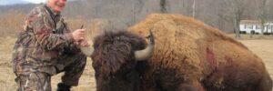 Buffalo Hunting in Tioga, PA
