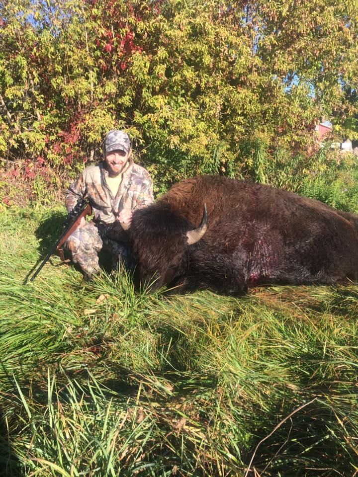 Hunting Trophy Bison
