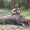 FAQ About Boar
