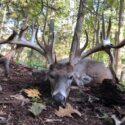Hunting Myths