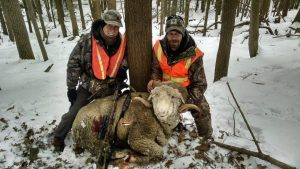 Hunting Rocky Mountain Rams