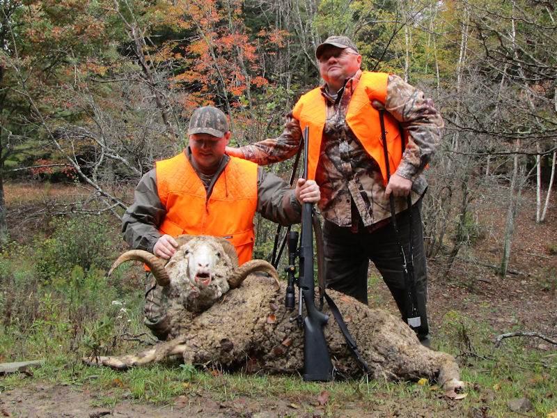 Rocky Mountain Rams
