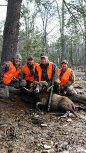 Hunting Corsican Ram