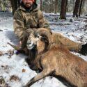 Man Hunting Corsican Ram